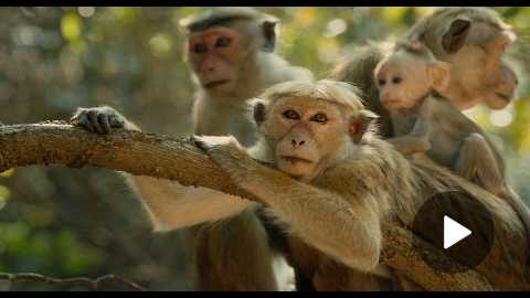 Disneynatures Monkey Kingdom - Official US Trailer 2